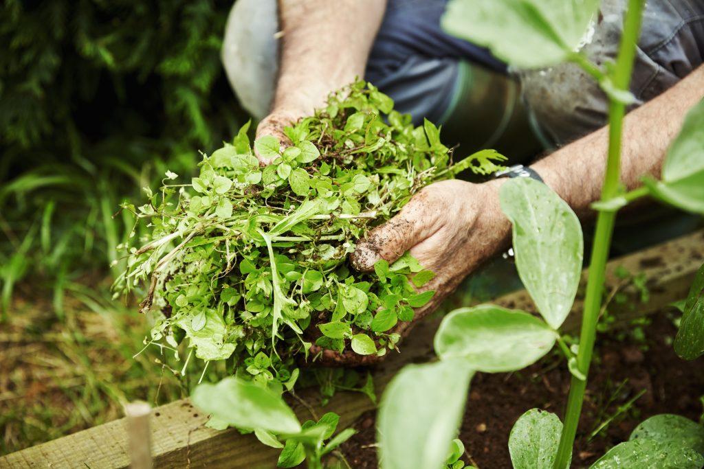 Onderhoudsvrije tuin door Multi Concurrent